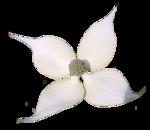 «садовый фэн-шуй» 0_65d54_e9a7bbd5_S