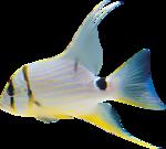 рыбку можно вырезать и вставить в аквариум.