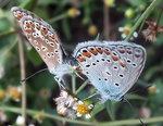 Пара бабочек.jpg