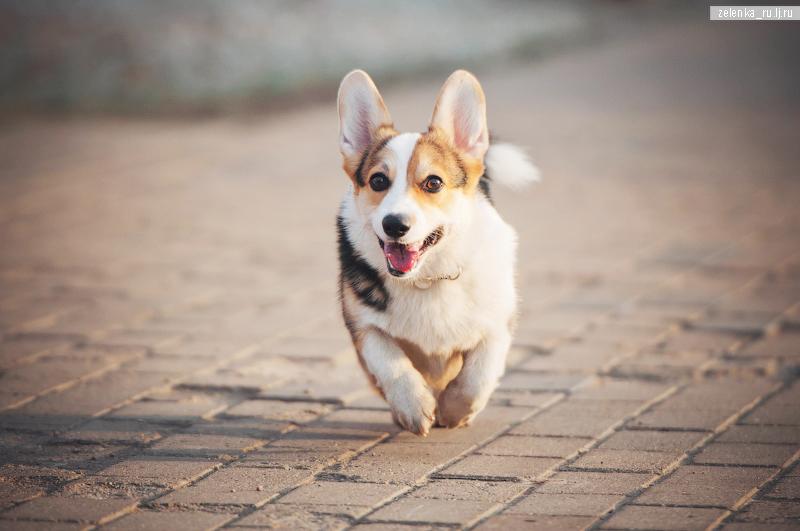 пофотографирую Ваших собак! - Страница 5 0_16984d_ff58d866_orig