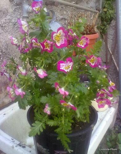 Что Это За Растение???