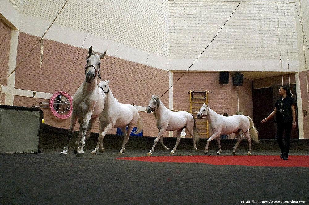Осень. Цирк Никулина. Лошади. 22.10.15.01..jpg
