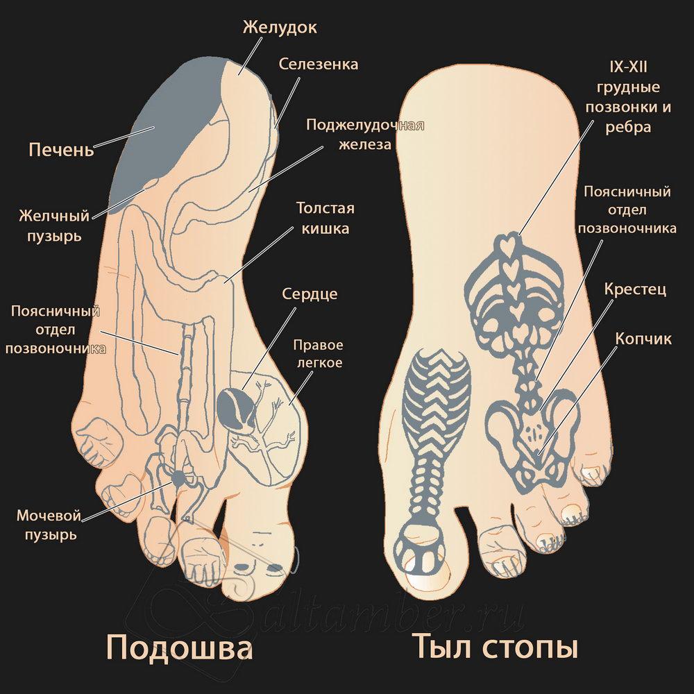 Система соответствия точек стопы органам человека Су-Джок  (су по-корейски это кисть, а джок - стопа).jpg