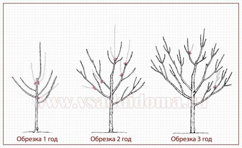 обрезку фруктовых деревьев