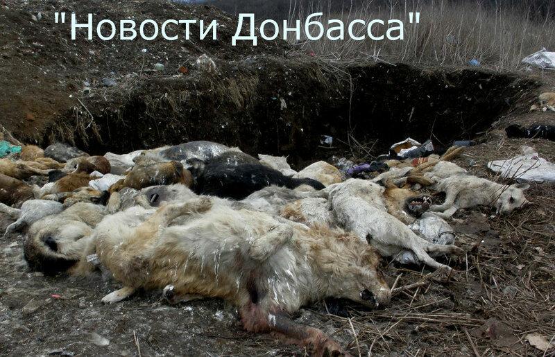 В Донецке массово уничтожают собак (фото)