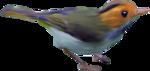 птица8.png