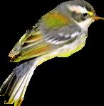 птица10.png