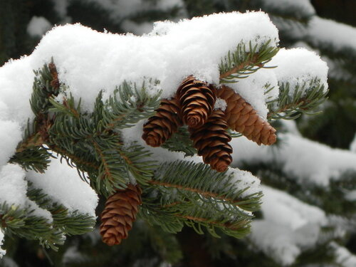 весенний снег... последний?.. / RSCN0033