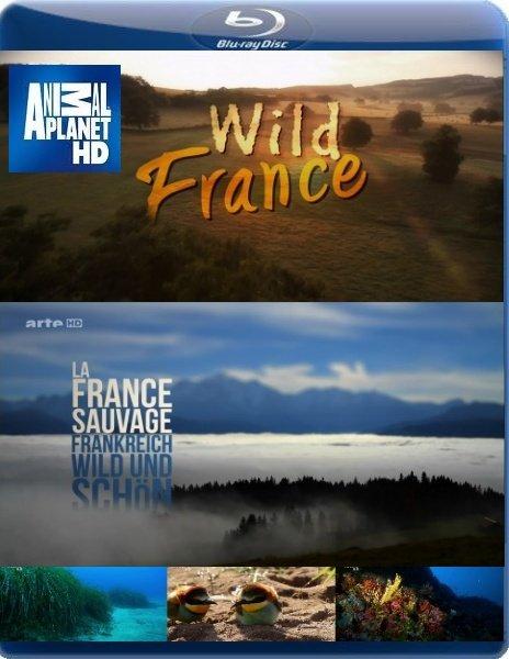 Дикая Франция / Wild France (2011/HDTV/1080р)