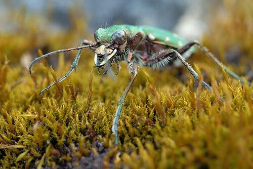 Martin Amm. Жизнь насекомых