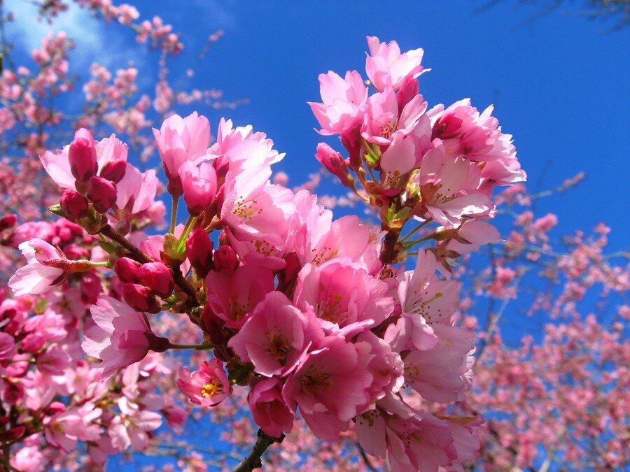 картинки весенних цветов: