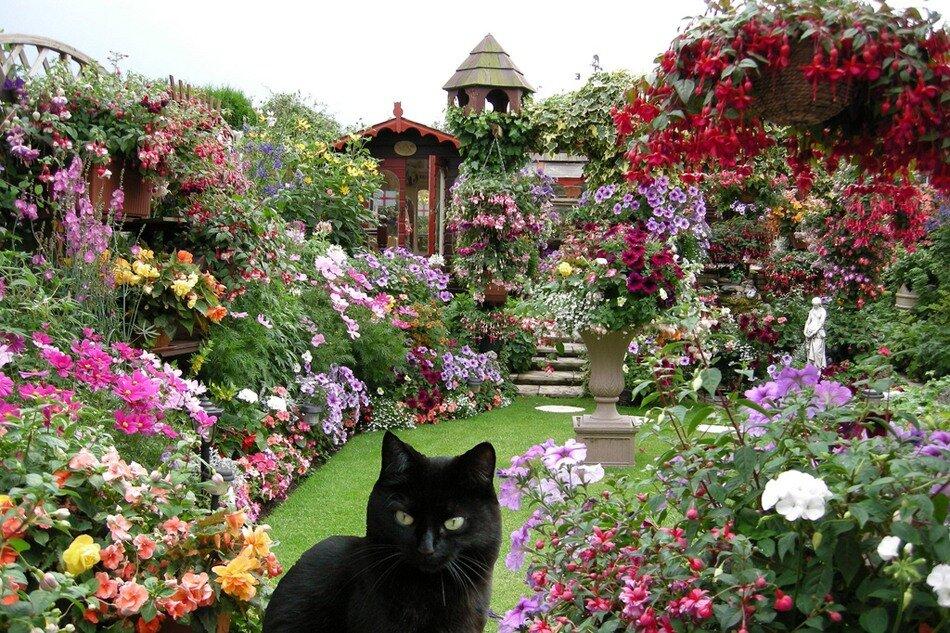 Чудесный английский дворик
