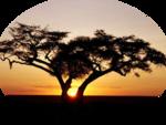 ASDwebs_African_4.png