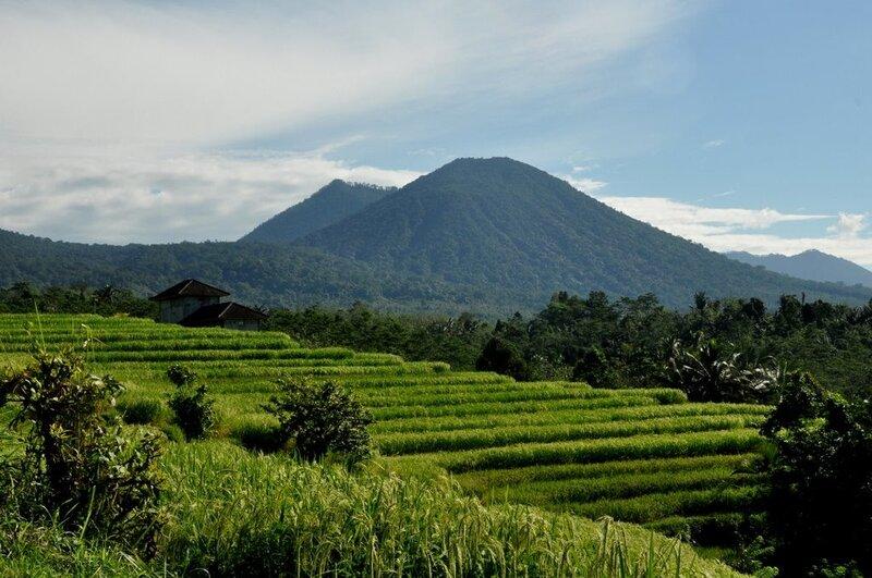 Рисовые террасы в окрестностях деревни Джутилувлух. Rice terraces near village Jutiluwuh.
