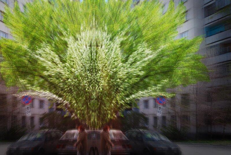 Яблочный цвет, разлетающийся на фоне майской зелени