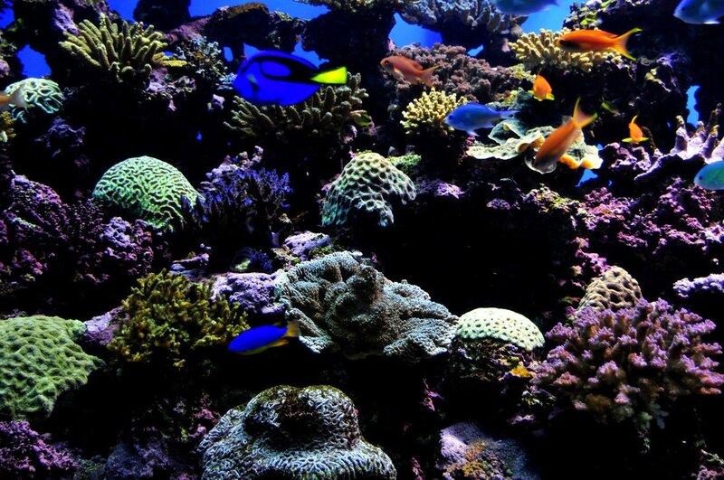 Подводный мир-Kораллы 99154