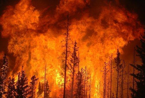 Восемь из 14 пожаров на Дальнем Востоке удалось потушить