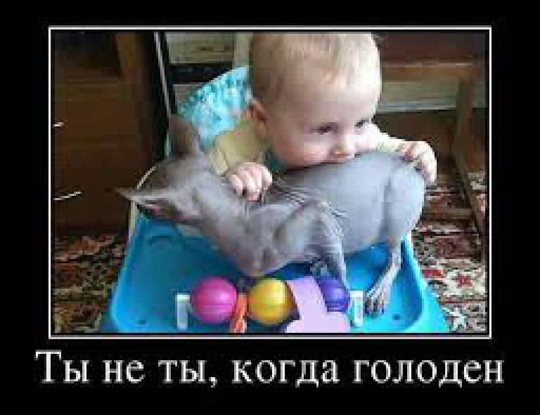 """Лучшие анекдоты недели от """"Цензор.НЕТ"""""""