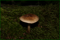 http://img-fotki.yandex.ru/get/59115/15842935.331/0_e58c6_b876f05a_orig.png
