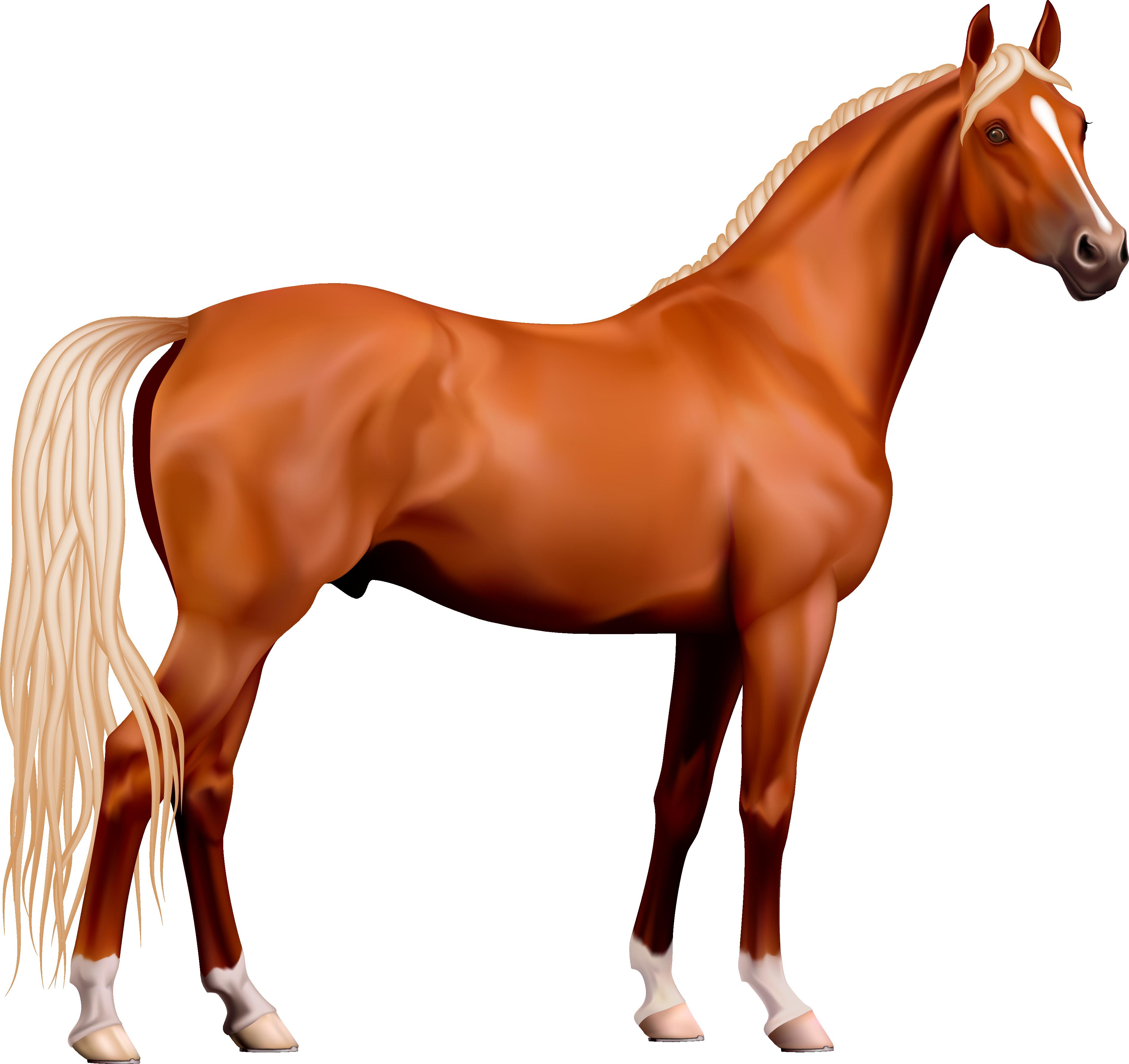Маме, лошадь в картинках для детей