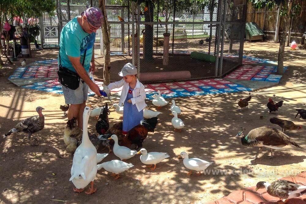 Птичник на овечьей ферме в Паттайе