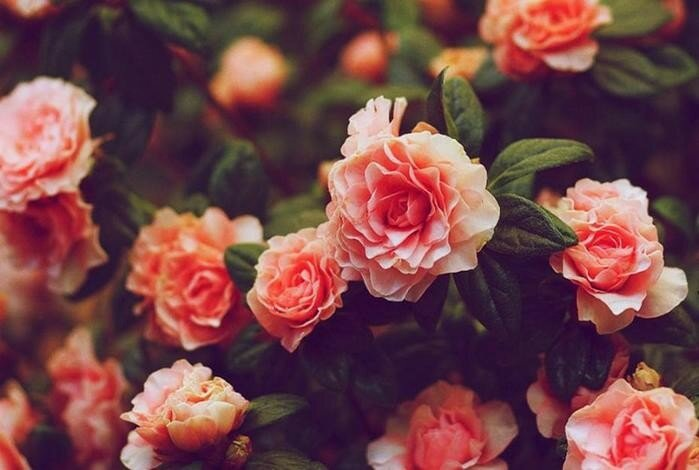 Безумная красота и аромат! 10 самых дорогих цветов в мире