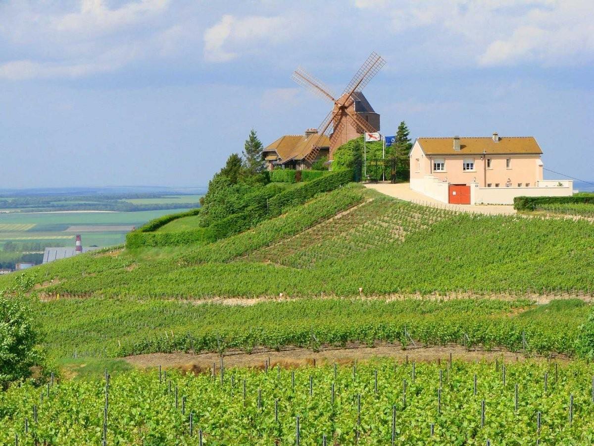 84. Выпейте шампанского в провинции Шампань во Франции.
