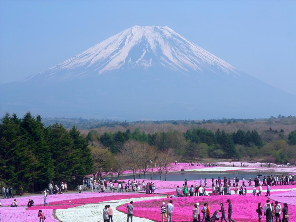 Япония. Парк Hitsujiyama. Цветение флокс. (huitze)