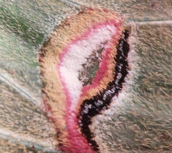Крылышко мотылька под микроскопом