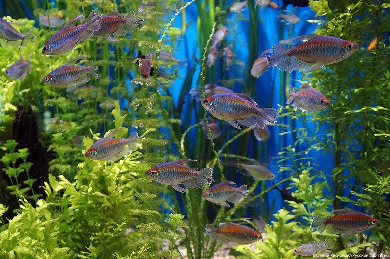 Зима. Москвариум. аквариум. 09.12.16.03..jpg