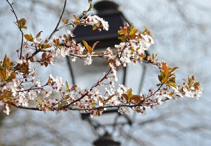 Весенний свет