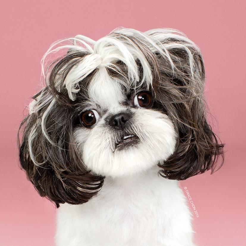 Grace Chon - Hairy - Nala после посещения парикмахера