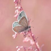 Бабочка белого цвета