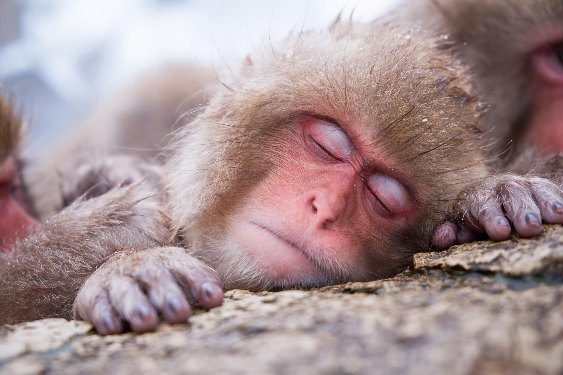 Спить