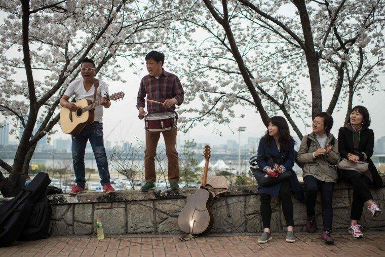 Фестиваль цветения вишни на острове Еуидо в Южной Кореи
