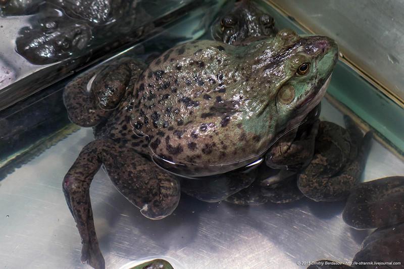 18. Помимо известных нам морепродуктов есть еще черепашки для супа и жабы по 320 руб. за кило живого