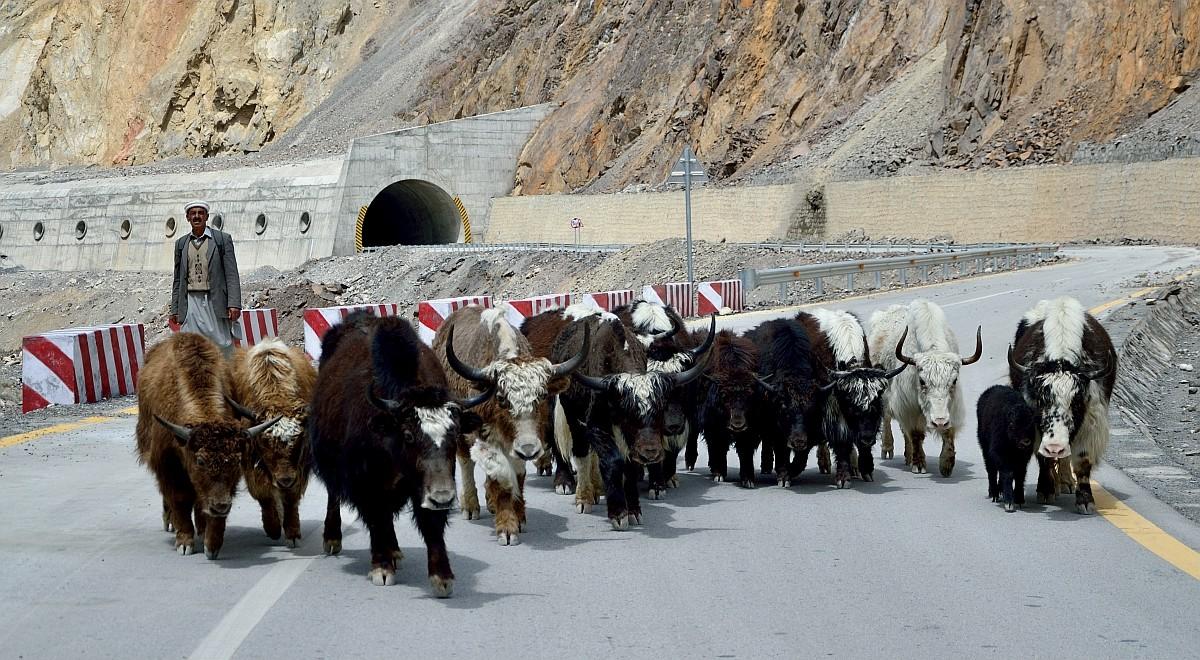 Каракорумское шоссе от обвалов защищают тоннели и вот такие галереи. Как раз тут нам попался пастух,