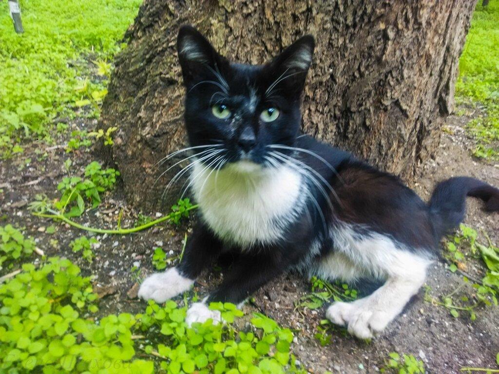 Котик-7.jpg