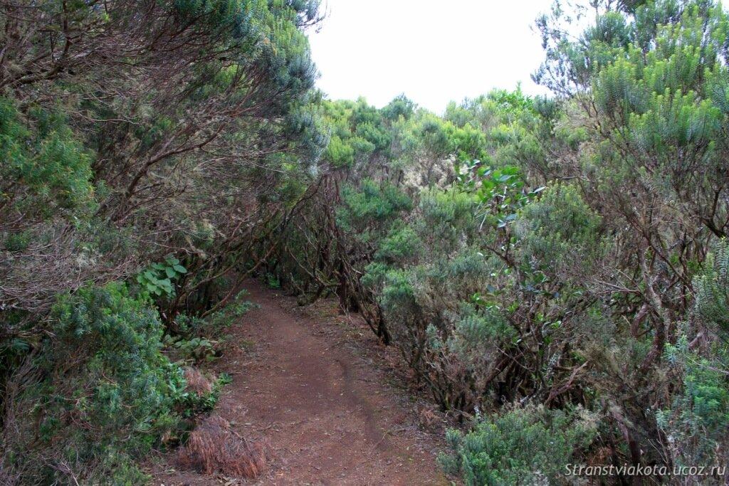 Вересковые деревья в Анаге
