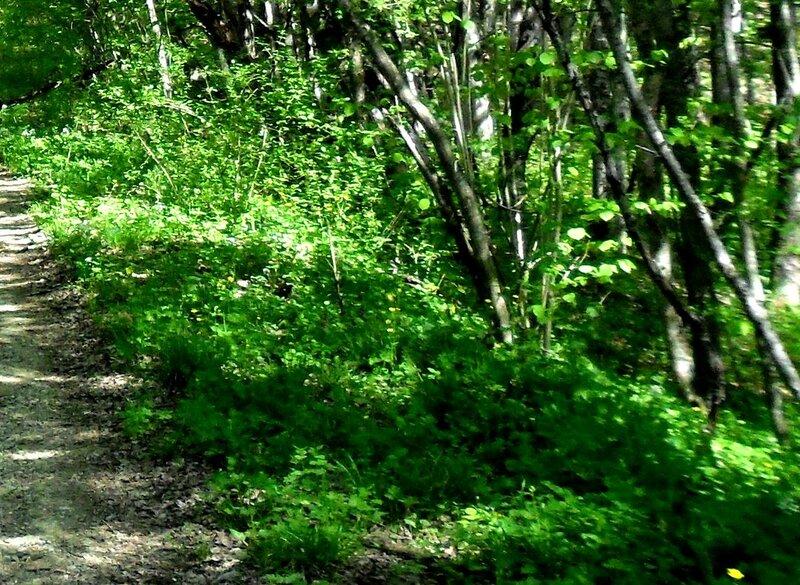 Апрель, в походе, путь к водопадам, окрестности Горячего Ключа (16).JPG