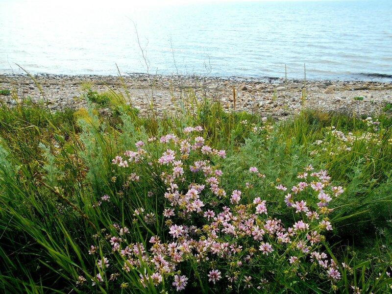 Цветы, берег ... DSCN2664.JPG
