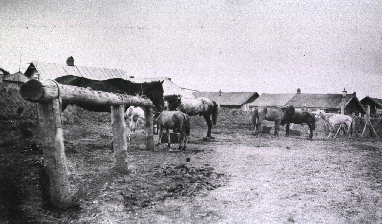 Ветеринарный лазарет в Харбине. Лошади