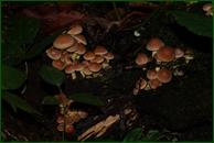 http://img-fotki.yandex.ru/get/59572/15842935.3c1/0_eeec6_79cc998b_orig.jpg