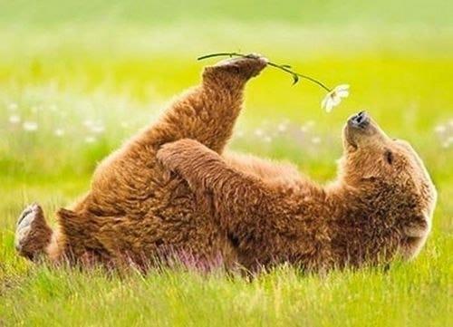 С первым днем лета! Медвежонок с ромашкой в лапе