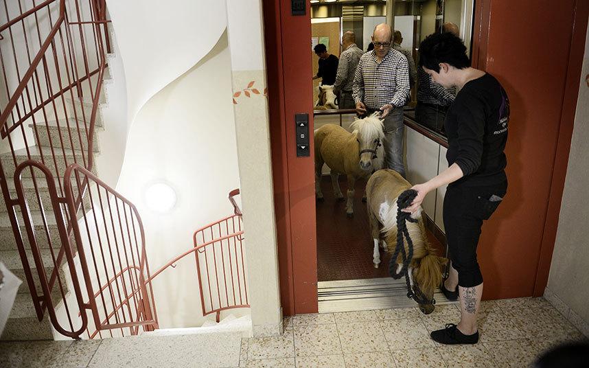 6. Чтобы доставить Аско и Бибби к пациентам дома престарелых «Минерва», их поднимают на лифте. По сл