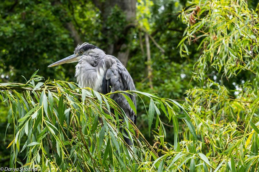 32. Вот такая живность в парке водится. А еще там летают попугаи — я сначала своим глазам не п