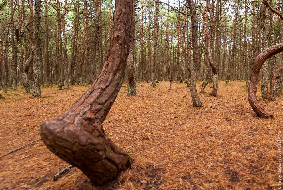 Они обязательно бы умерли и превратились в танцующие деревья в том месте, где потерялось кольцо