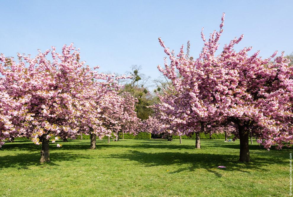 Розовый цвет в природе редко встречается в таких количествах, поэтому мозг поначалу отказываетс