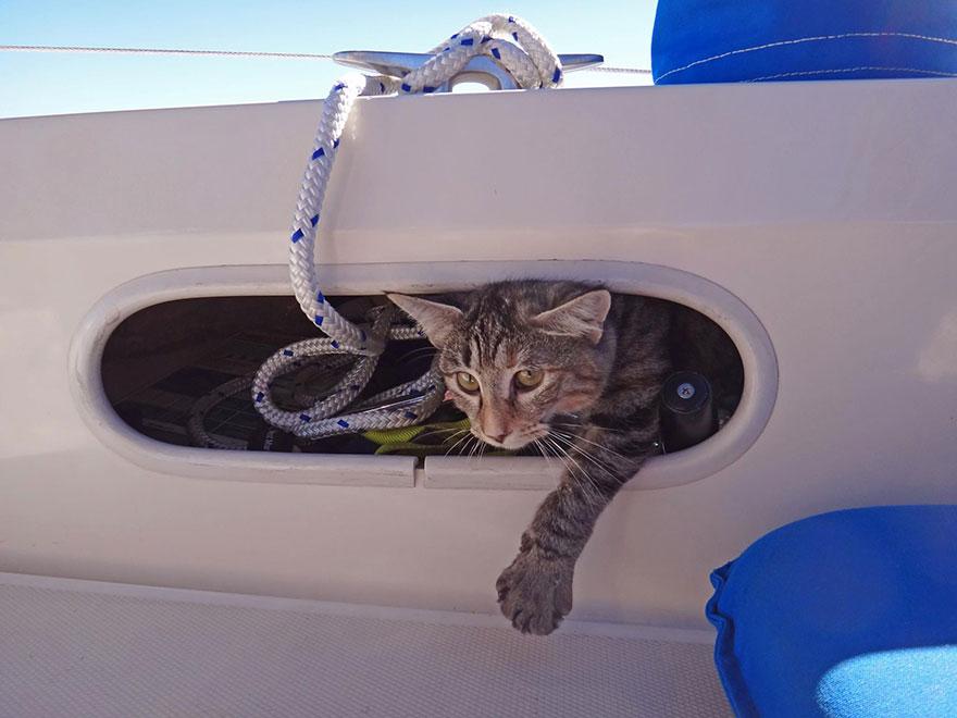 «Когда мы стоим на якоре, кошка любит сидеть на палубе и смотреть на рыбу за бортом».
