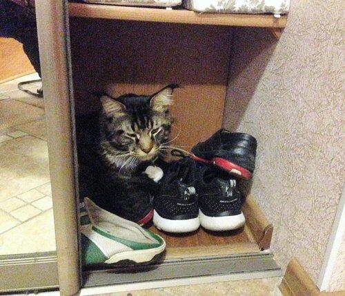 6_На обуви.JPG
